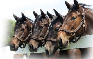 Horse Vaccines