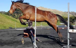 Healthy Horse