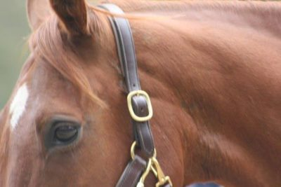Deworming your horse