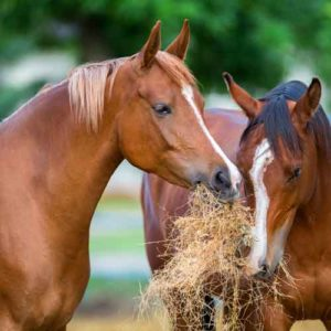 Horse Diet Evaluation