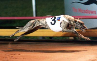 Greyhound Health
