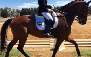 Magnesium for horses
