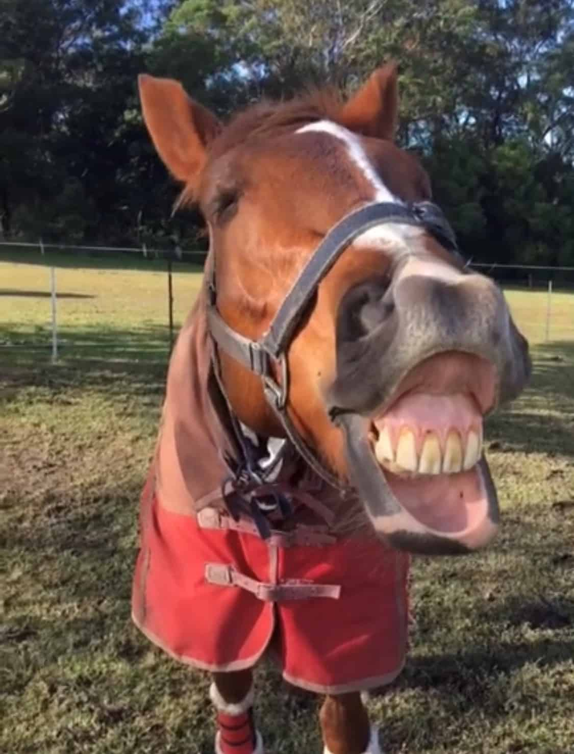 15 facts you may not have known about your horse