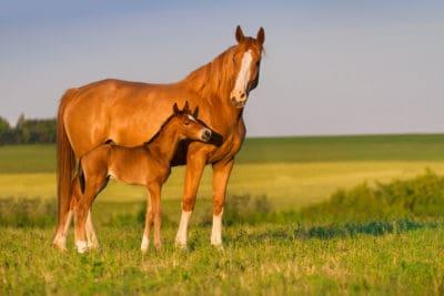 Feeding growing horses