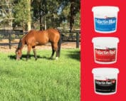 The Importance of Calcium and Phosphorus in your horses diet