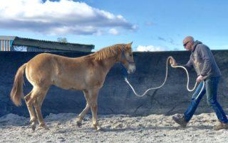 Anroc Quarter Horses