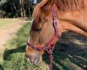 Recognising a sick horse