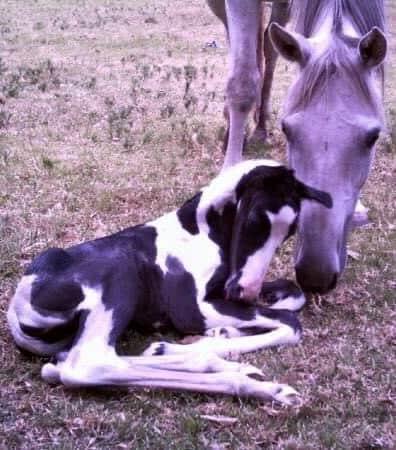 foaling down