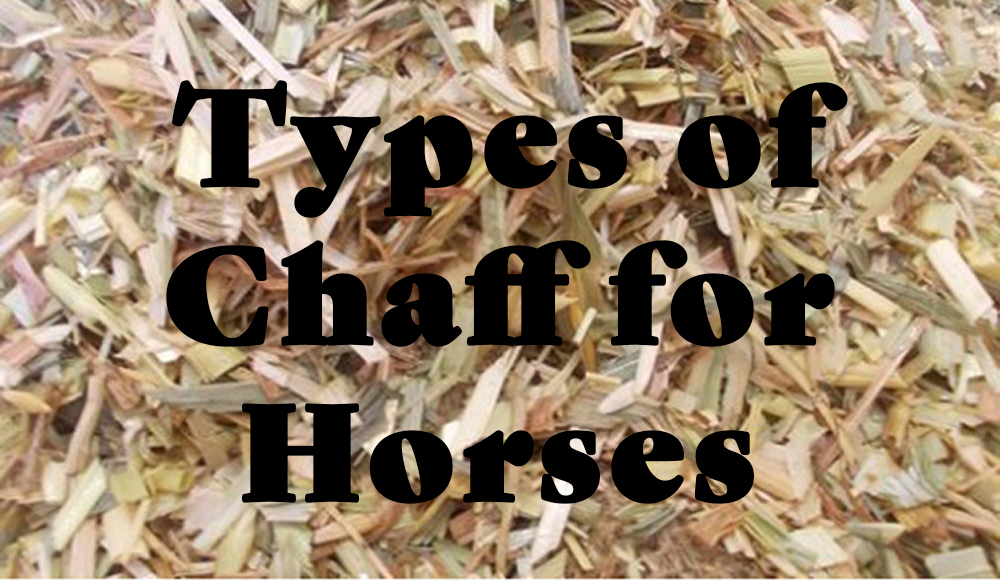 Chaff for Horses
