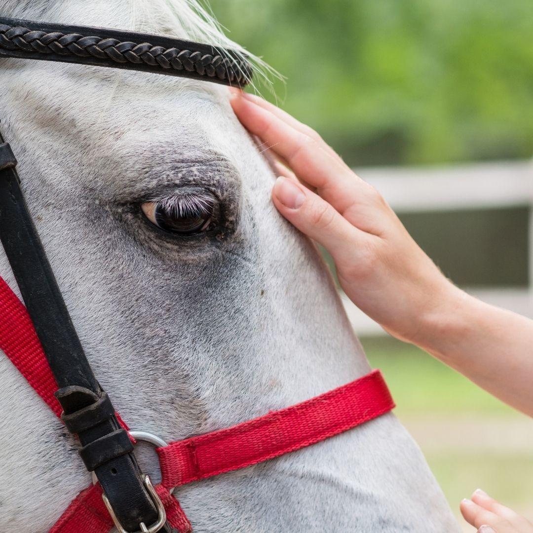 Basic Horse Needs