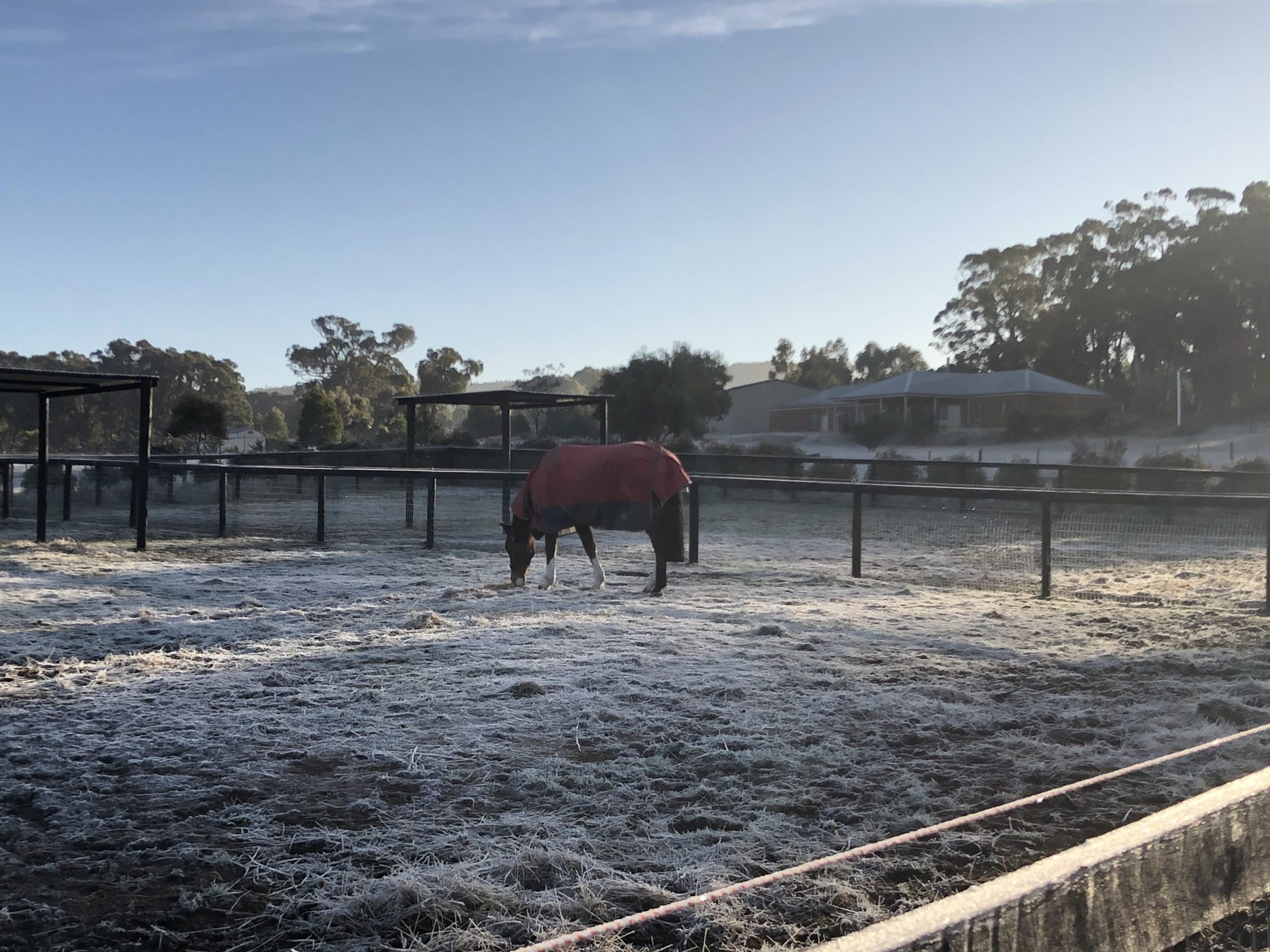 Should i rug my horse in winter