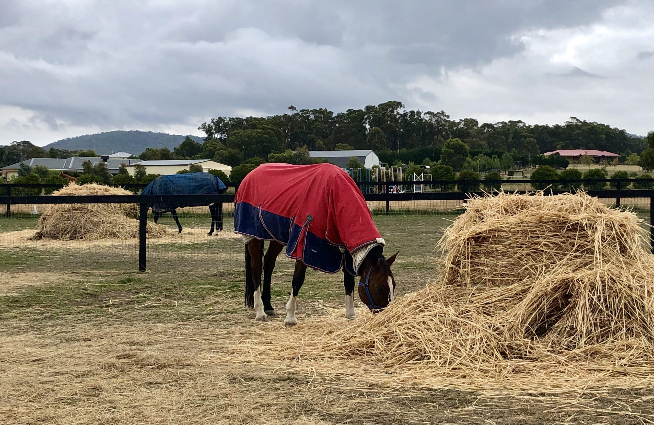 Do I need to feed my horse more hay in winter?