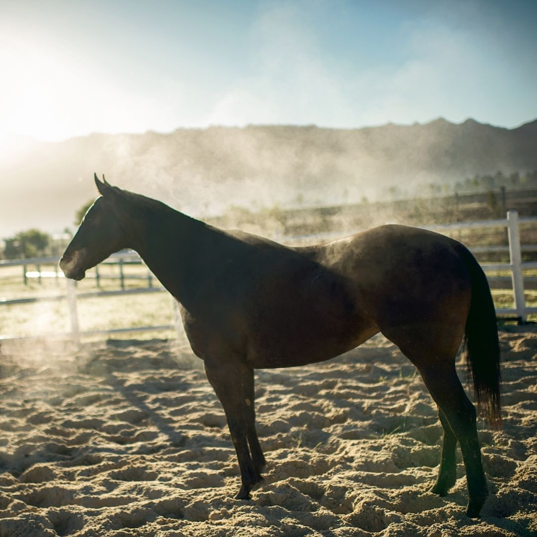 How do i know if my horse is cold?
