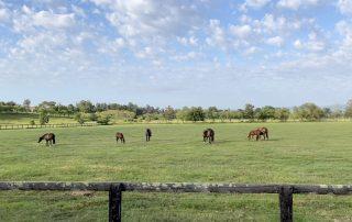 Clean horses' paddock
