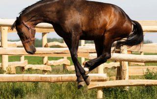 Horse Hyperactive