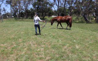 Why do we lunge horses